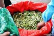 As famosas e necessárias hojas de coca!