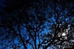 Árvore do mirador