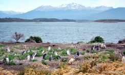 Pinguinera na Isla Martillo em Ushuaia