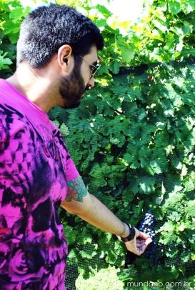 Argentina---Mendoza---Vinhos---2---Andeluna--28
