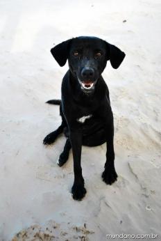 O sorriso do cachorro, feliz que nem a praia :)