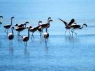 Os flamingos! :D