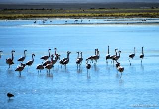 Mais flamingos! :D