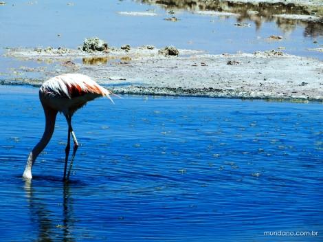e flamingo :)