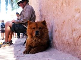 Os super cachorros de San Pedro