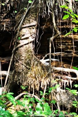Trilha até a Cachoeira do Prata