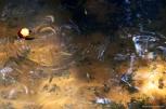 Água cristalina e os peixinhos